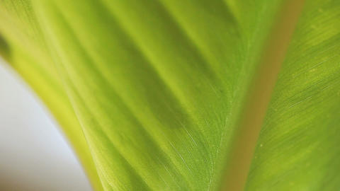 tropical leaf closeup Live Action