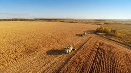 Harvester Work On Cornfield stock footage