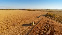 Harvester work on cornfield Footage