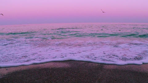 Surf after Sunset and Seagulls. Slow Motion Footage