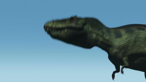Tyrannosaurus Roars (Blue Sky) stock footage