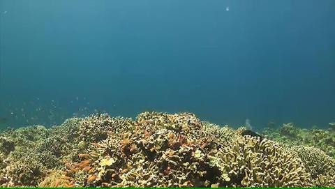 Coral reef in Philippines ภาพวิดีโอ