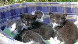 Portrait of four little kittens 2 Footage