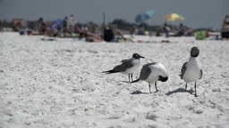 Birds On A Busy Beach (1 Of 13) stock footage