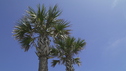 Palm Trees on a Beautiful Sunny Day (1 of 2) Footage