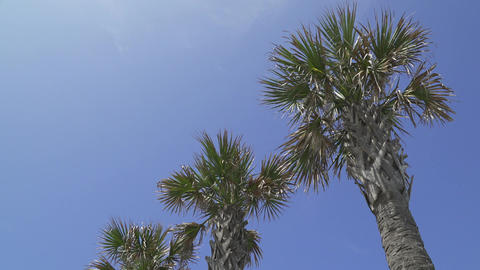 Palm Trees On A Beautiful Sunny Day (2 Of 2) stock footage