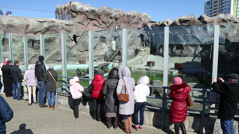 Visitors look at a zoo animals Footage