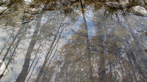 Huge High Birch Swinging, Shooting Through The Clear Flowing Water stock footage