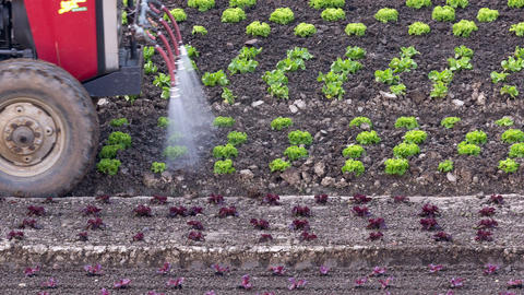 Tractor Irrigating Salad Seedlings stock footage