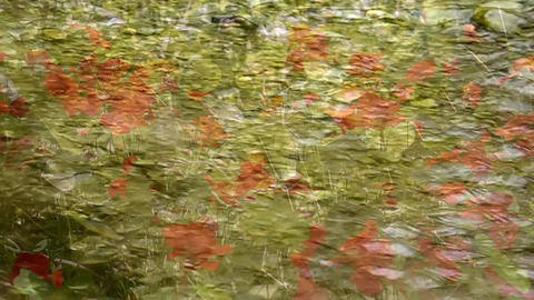 Abstract floral background, shot through the clear flowing water Footage