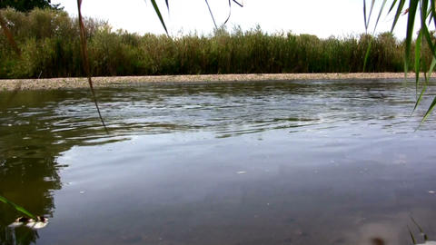 (Perfect Loop) Creekside Wetland Waterflow Shot stock footage