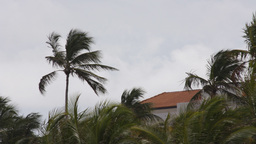 miami moody palms coast sea windy Footage