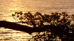 Golden Waters Behind The Pines At Sunrise stock footage