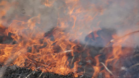 Burning dry grass - reason of forest fires Footage