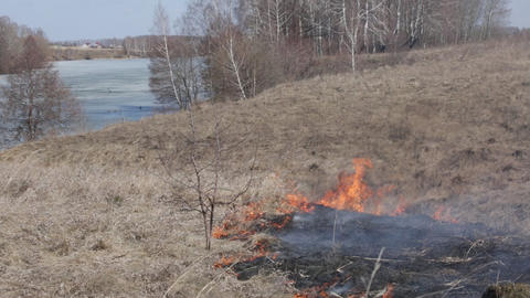 Dry grass burns on the river bank near the wood Footage
