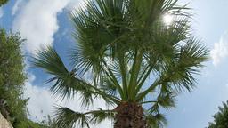 Palm Tree Fisheye stock footage