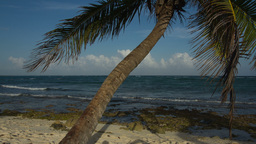 Paradise Beach Palm Tree Mexico stock footage