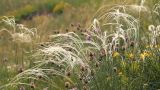 Wild Grass 2 Footage