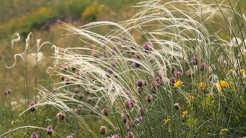 Wild Grass 2 Stock Video Footage