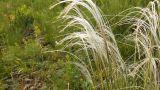 Wild Grass 4 Footage