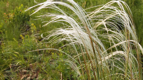 Wild Grass 4 Stock Video Footage