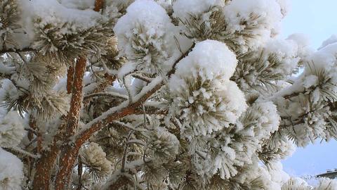 Winter scene 18 Stock Video Footage
