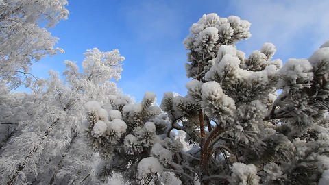Winter scene 20 Stock Video Footage