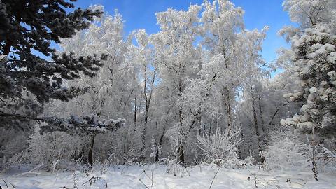 Winter scene 22 Stock Video Footage
