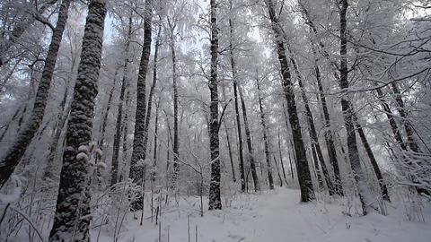 Winter scene 24 Stock Video Footage