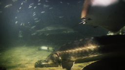 Underwater footage of exotic fishes Stock Video Footage