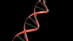 DNA loop Alpha Animation