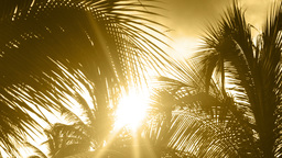 sunlight palms sunset tropical Footage