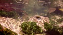 underwater snorkeling in mexico Footage