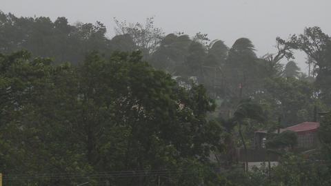 Trees Thrash In Hurricane Winds Super Typhoon Haiyan Tacloban Footage