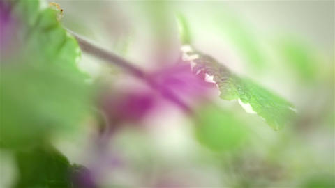 Summertime Flowers Shot With Macro Lens stock footage
