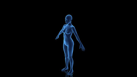 Female Body Wireframe Animation