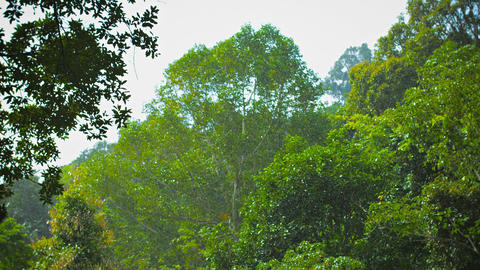 Tropical Rain Above The Forest stock footage
