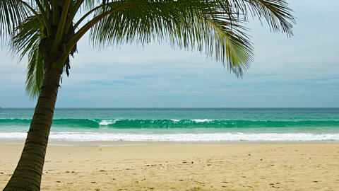 View of uninhabited sandy beach with palm tree Footage