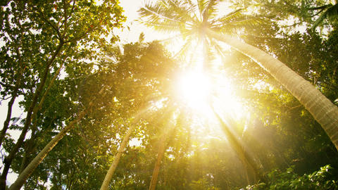 Sun rays through the tropical trees and palms Footage