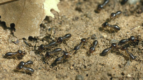 Working termites on the ground close-up Footage