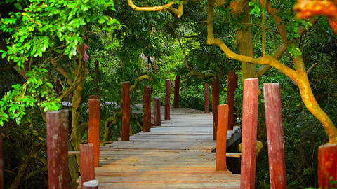 Tourist Strolling along Elevated Wooden Walkway in Cambodia Footage