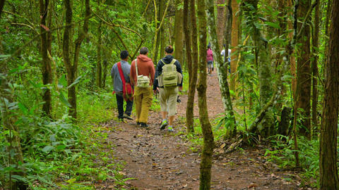 CHIANG MAI. THAILAND - CIRCA DEC 2013: Foreign tourists hiking along a nature tr Footage
