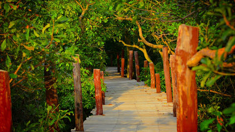 Elevated Walkway through the Mangrove Forest Footage