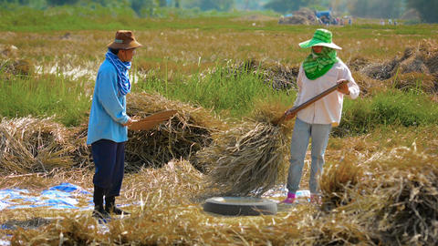 CHIANG RAI. THAILAND - CIRCA DEC 2013: Agricultural Workers Performing Manual Th Footage