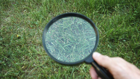 Perspective Shot of Grass Through a Magnifying Glass Footage