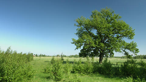 Refreshing Breeze Stirs Tree Leaves in a Meadow Footage