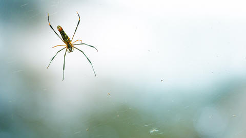 Shifting Focus from Foamy Water to Golden Spider Footage