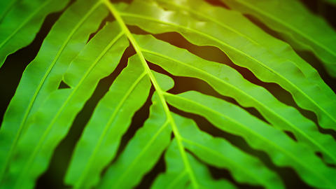 Extreme Close-up of a Green Fern Swaying in the Breeze Footage