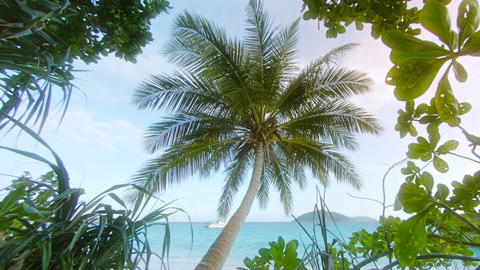 Tropical trees and coconut palm on the ocean coast. Thailand, Similan Islands Footage