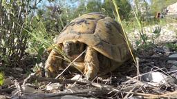 Turtles 0